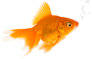 Best web development company in los angeles los angeles for Types of small fish